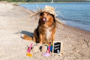 Hund mit Strohhut im Sommer macht Urlaub am Meer auf der Insel Rgen