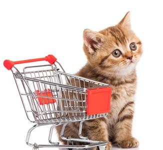 Katzenkaufberatung