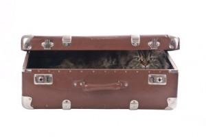 Katze im alten Vintage Koffer