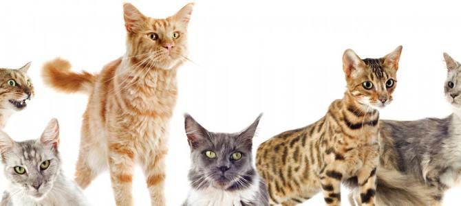 Katze und Hund bzw. Mehrkatzenhaltung